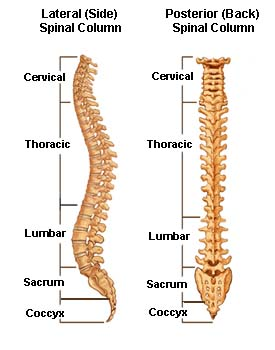 different spinal cord injury levels