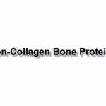 Non-Collagen Bone Proteins