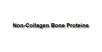 Non-Collagen Bone Proteins