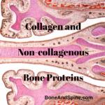 bone proteins