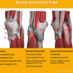 knee bursas