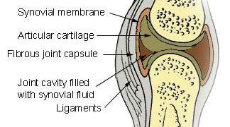 synovial-fluid