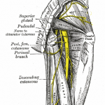 Relation of sciatic nerve with piriformis muscle