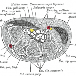 Carpal Tunnel Diagram