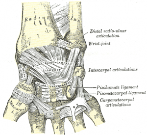ligaments-of-wrist