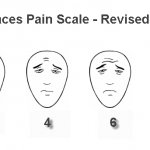 Faces Pain Scale Revised