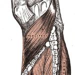 Popliteus Tendinopathy occurs in Popliteus Muscle