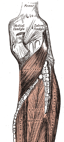 Popliteus Tendinopathy occurs in Popliteus Muscle