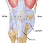 knee and patella