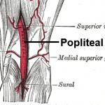 Popliteal Artery anatomy