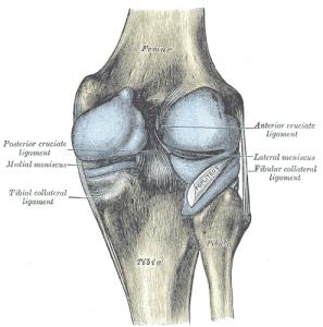 Posterior aspect knee