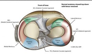 menisci of knee