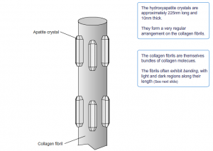 Bone anatomy-collagen and crystal