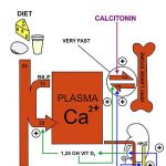 Calcium Homeostasis is complexely egulated