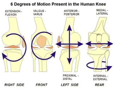 Degrees of freedom Knee