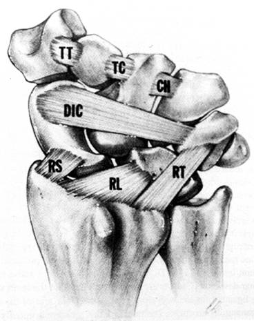 Dorsal Ligaments of Wrist