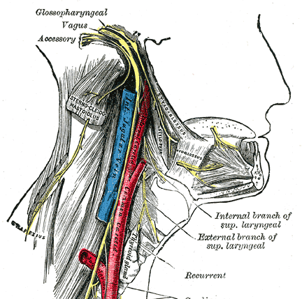 spinal accessory nerve course. Spinal accessory nerve palsy leads to trapezius paralysis