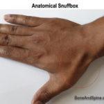 anatomical snuffbox image and surface anatomy