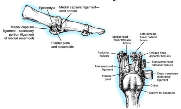 metatarsophalangeal joint for hallux valgus