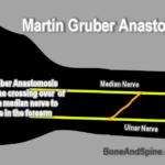 Martin Gruber Anastomosis