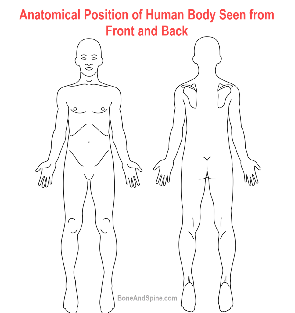 Anatomical position of human body